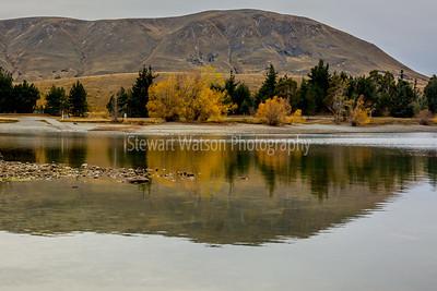 Lake Camp Tree reflections