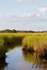 Big Cypress National Preserve, Florida