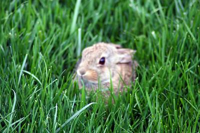 Bunny-004