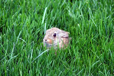 Bunny-003