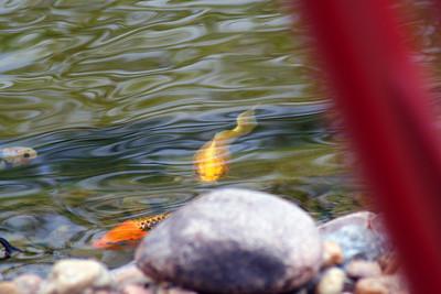 Fish-002