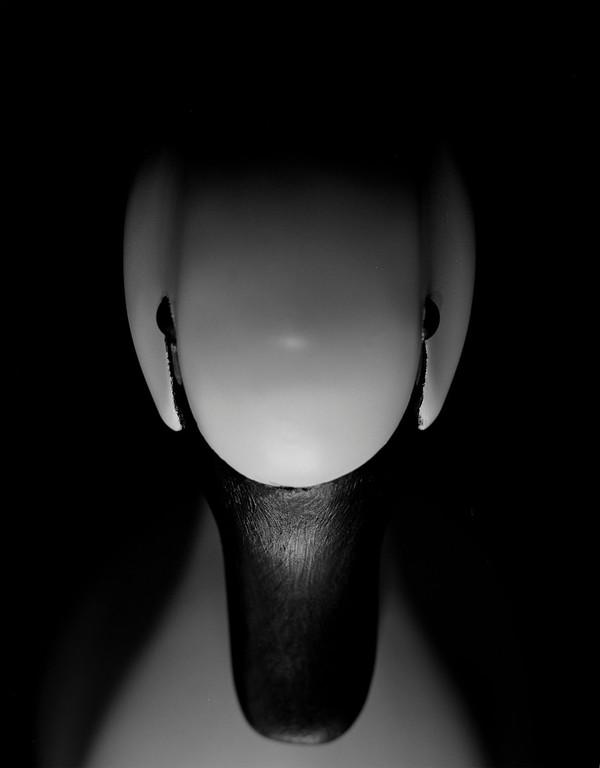 Swan (on exhibit: Caffe Ladro)