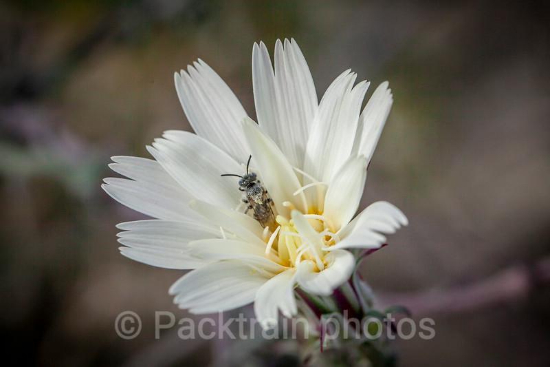 Bee Heaven  -  BH2