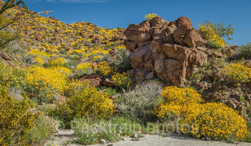 Canyon Rock Garden  -  CRG1