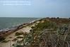4/30/2011 - Northeast shoreline, looking South