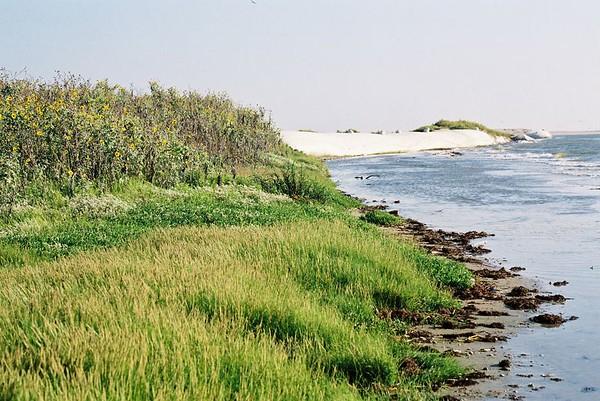 Northeast corner of island; facing north; September 2001