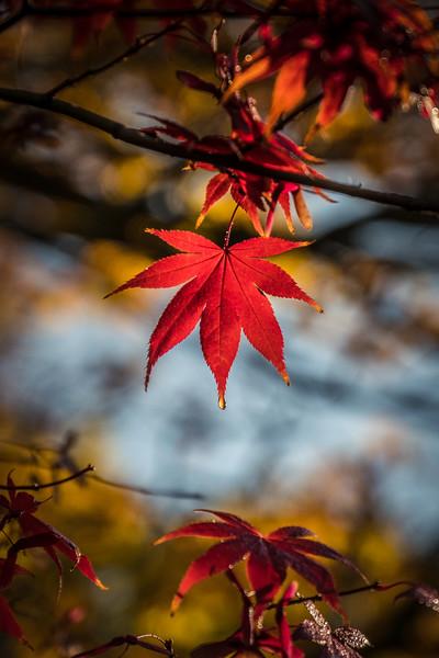 Autumn in Australia