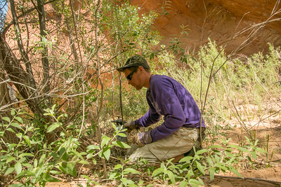 Wilderness Volunteers: 2017 Glen Canyon National Recreation Area (Utah)