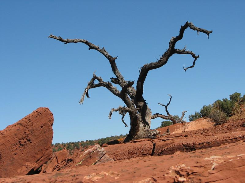 Tree on Mesa