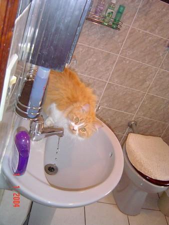brida bebendo agua