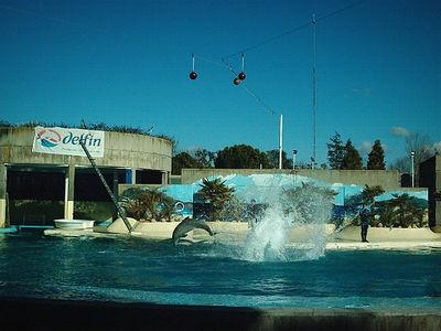 Zoo (Delfines) - Madrid