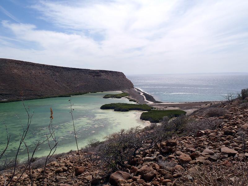 March 4: Mangrove lagoon south of Playa Coralito.