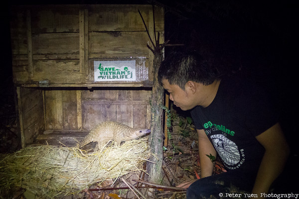 Save Vietnam's Wildlife releasing the first captive born baby pangolin. Without a safe habitat to release them into, it could not be done.