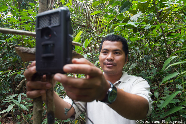 Wildlife Alliance staff checking their camera trap to help keep track of released animals.