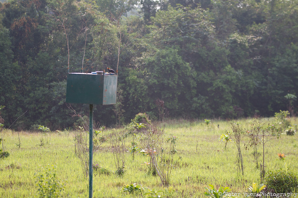 A feeder for released birds.