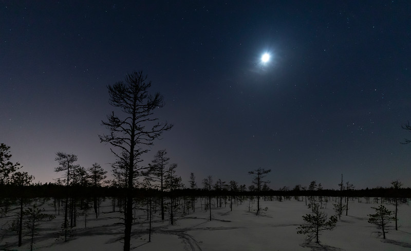 The Moonlit Swamp