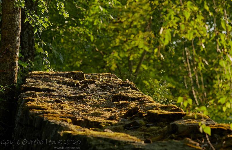 Steinmur (Stone fence)