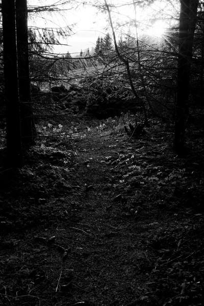 Kveld. (Sølvsberget, Gran)<br /> (Sunset in the wood)