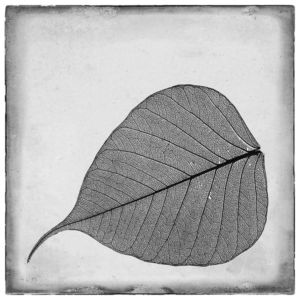 Lauv (Leaf)
