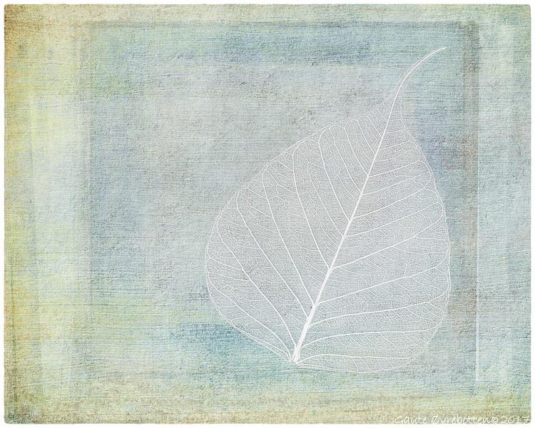 Lauv<br /> Leaf