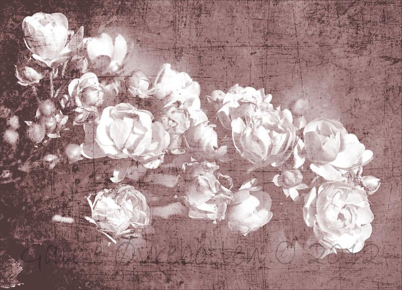 Roser - utgåve 1 (foto og ymse teksturar bearbeida i Photoshop Elements 10). Roses version 1 (Photo and textures edited in PSE10.)