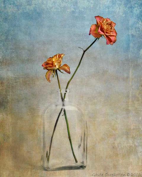 Roser - variant.<br /> Roses - color version, textures.