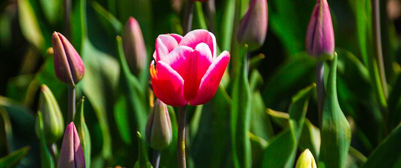 525 Little Ms Pink.jpg