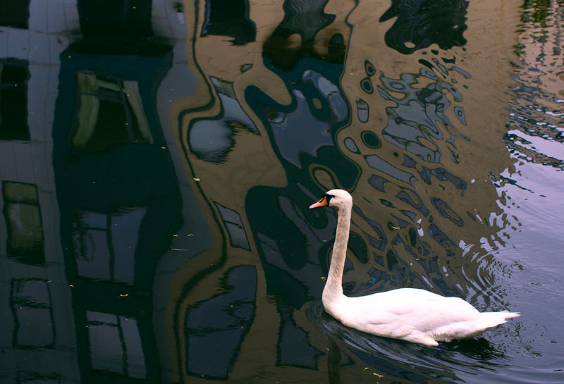 525 Swan Prince.jpg