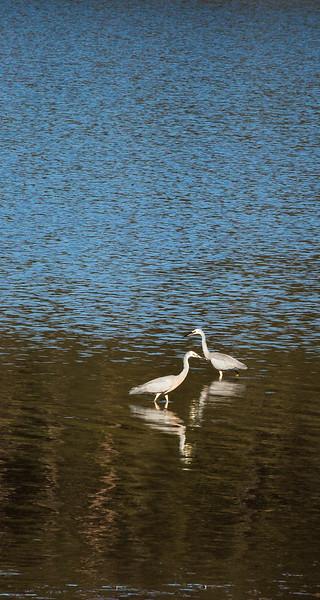 Lover Birds.jpg