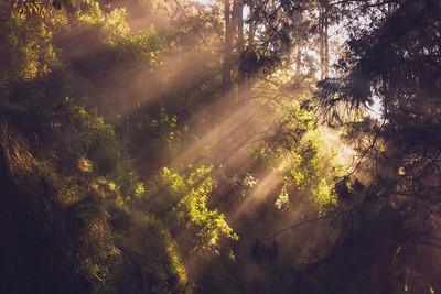 519 Morning Glory