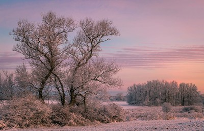 Snow on the trees at sunrise next to Colby Farm
