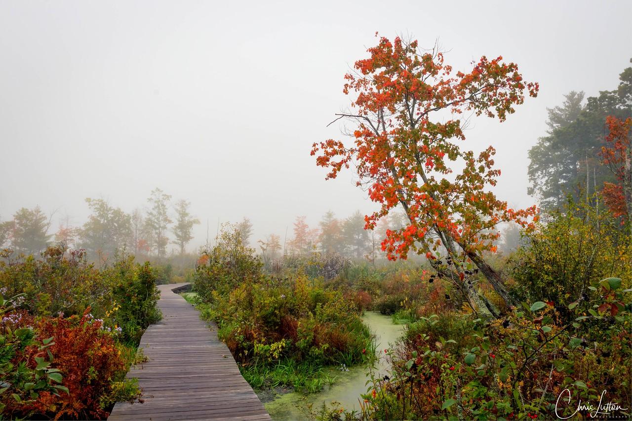 Danvers-Wenham Swamp Walk