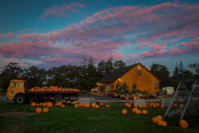 Colby Farm Pumpkins