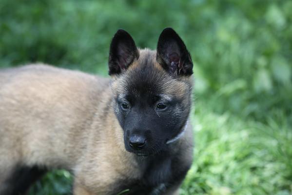 Essor puppies 05_17_2011