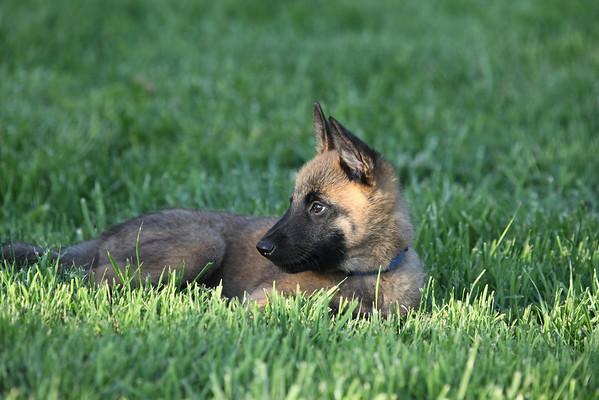 Essor pups 05_31_2011