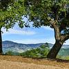 Vista de Napa Valley