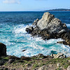 Parque Point Lobos