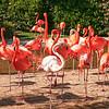 Jardim Zoológico de San Diego