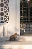 Gato de mezquita