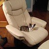 new chair for boat not for sale or Sugar the doggie