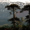 FOTO SUR DE CHILE 2 MATÍAS RECART