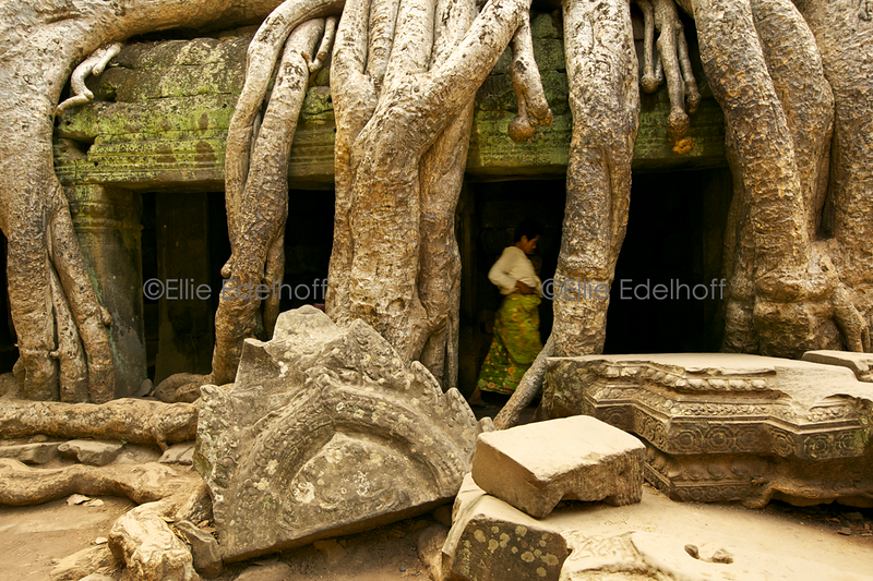 Under Ta Prohm's roots - Cambodia