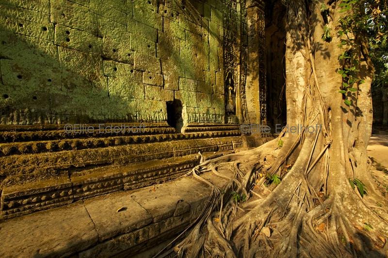 Mossy Shadows – Cambodia