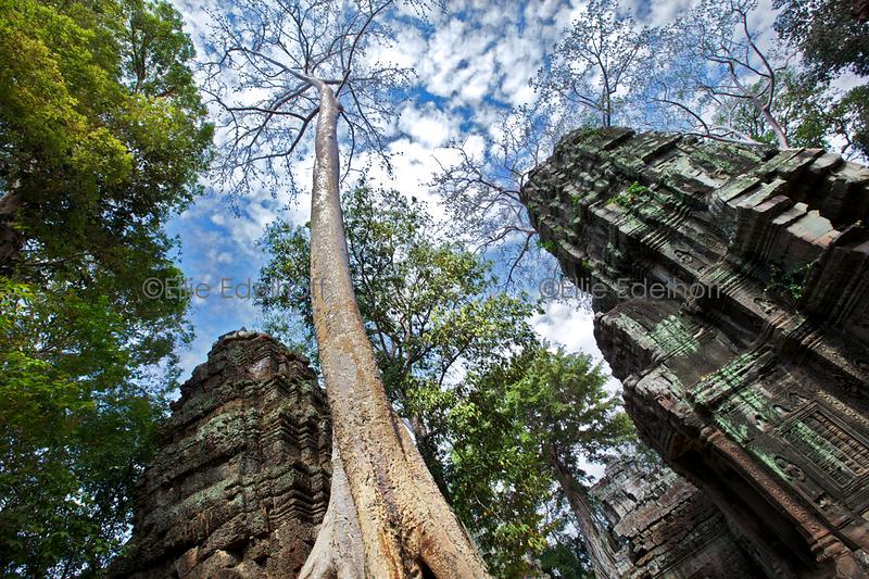 Ta Prohm's Towers – Cambodia