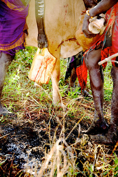 Bleeding cow - Mursi village