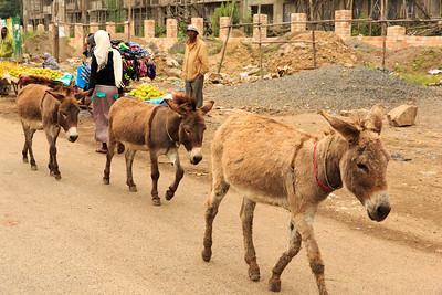 Ethiopia New 2016_1260