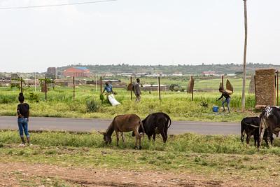 Ethiopia New 2016_0174