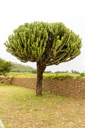 Ethiopia New 2016_0175