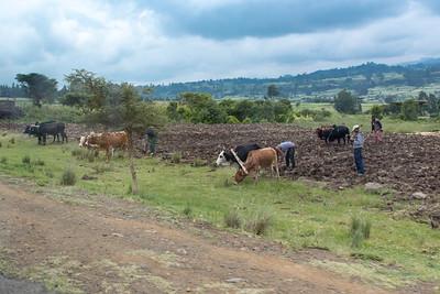 Ethiopia New 2016_1266