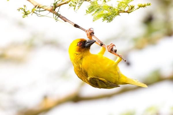 Lake Langano and Birds